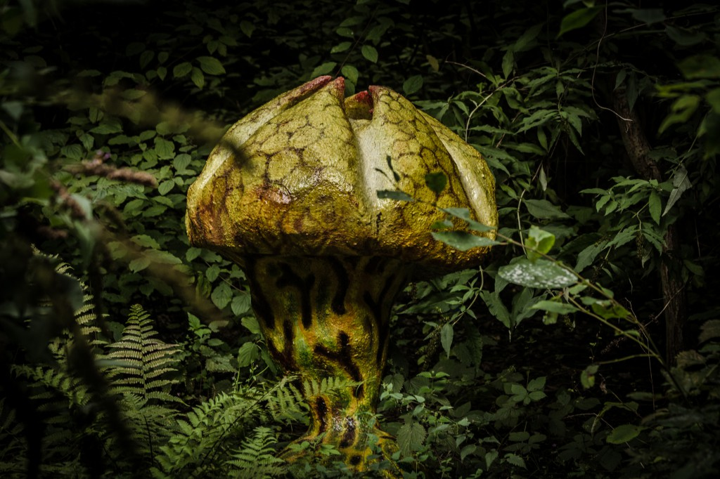 Pilz im Dickicht